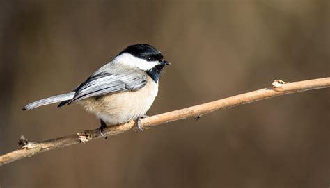 Fondos de pantalla : Pájaros traseros, paro, invierno ...