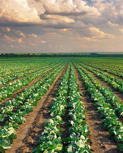 Fondos para la agricultura ecológica de Castilla – La Mancha