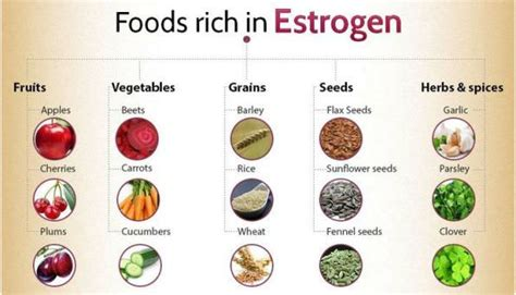 Foods High in Estrogen for Balanced Hormones