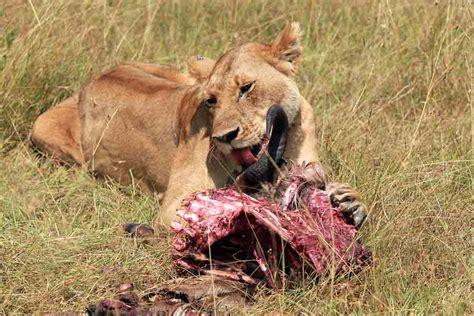 Formas de alimentación de los animales, clasificación ...