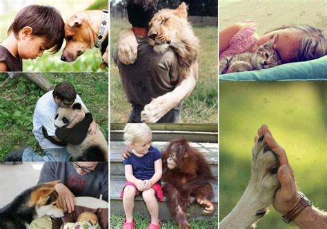 Foro: No compres animales, ADOPTA!!! – Mayormente.com