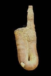 Fósiles   Ammonites   Lytoceratida   Región de Murcia Digital