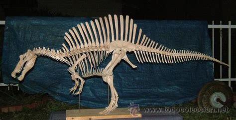 fosiles. dinosaurios   spinosaurus aegyptiacus   Comprar ...