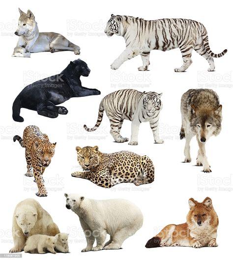 Foto de Conjunto De Animais Carnívoros e mais fotos de ...