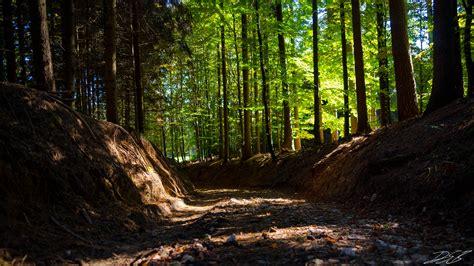 Foto de stock gratuita sobre bosque, fondo de pantalla HD ...