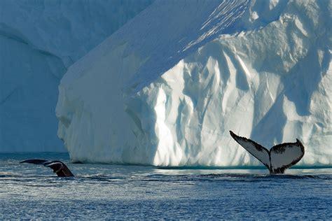 Foto Groenlandia, viaggio nella fabbrica degli iceberg ...