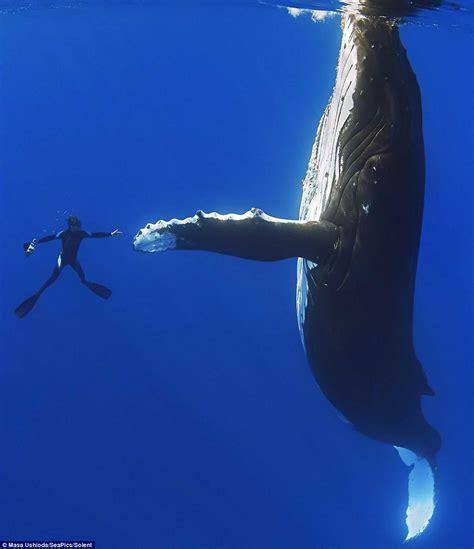 FOTOGALERÍA: El sorprendente momento en que una ballena ...