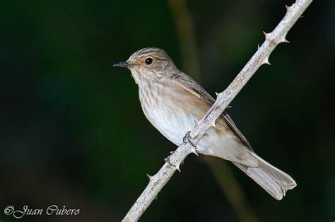 FOTOGRAFÍA y NATURALEZA: Las aves insectívoras invernantes ...