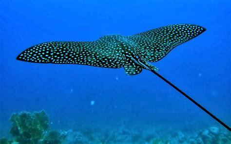 Fotografias de animales marinos   Fotos Bonitas de Amor ...