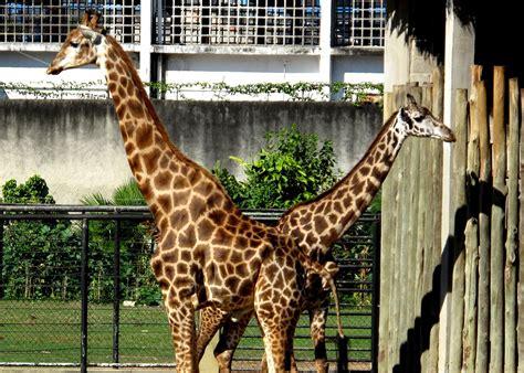 Fotografias de Roberto Machado Alves: Jardim Zoológico do ...