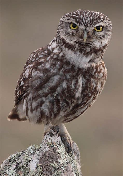 Fotos bonitas de aves nocturnas | Imagenes De Aves | Aves ...