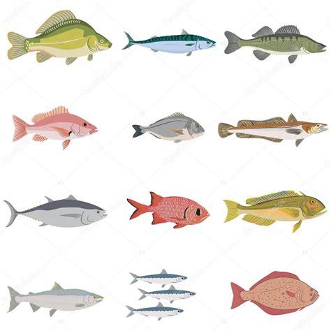 Fotos: clases de peces | sistema de clases de la ...