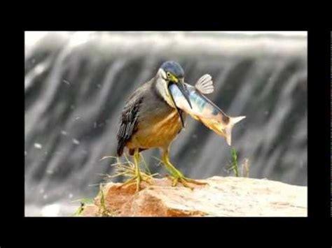 Fotos curiosas y chistosas de animales   YouTube