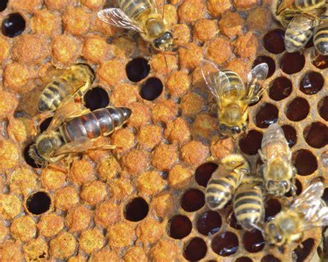 Fotos: Curiosidades, ciencia y naturaleza de las abejas ...