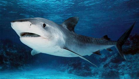 FOTOS DE ANIMALES MARINOS 【 Imágenes de animales marinos