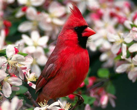 Fotos de aves   Taringa!