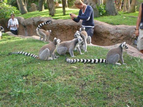 Fotos de Bioparc Fuengirola   Zoológico   Málaga   España
