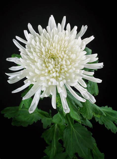 Fotos De Centros De Flores Para Difuntos