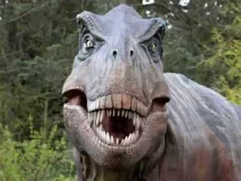 Fotos de dinosaurio T rex para niños   YouTube