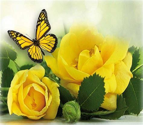 Fotos De Flores Para Compartir En Facebook y Whatsapp ...