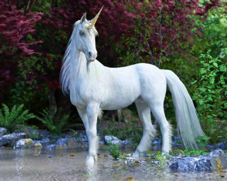 Fotos de Fotografía realista unicornio de stock, imágenes ...