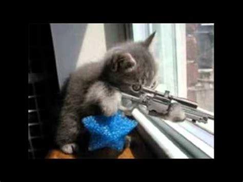 fotos de Gatos Graciosos   YouTube