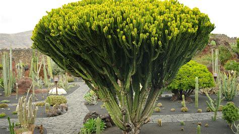 Fotos de: Islas Canarias   Lanzarote   El jardín de los ...