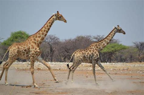 Fotos de Namibia   Imágenes destacadas de Namibia, África ...