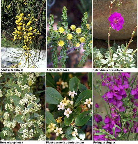 Fotos de plantas y sus nombres excursión a Barcelona y al ...