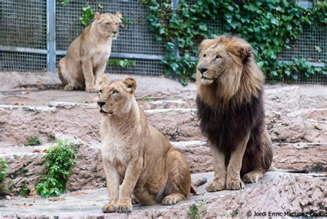 Fotos de un aficionado.: Continuación Zoo de Barcelona...