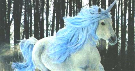 Fotos De Unicornios De Verdad   SEONegativo.com