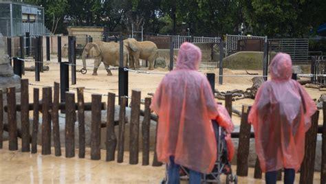 Fotos: El zoo de Barcelona, en imágenes   Sociedad   EL PAÍS