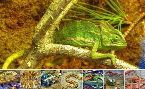 .: Fotos Exposición Fauna Escondida Centro Comercial La ...