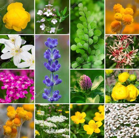 Fotos: flores aromaticas | fresco plantas aromáticas ...
