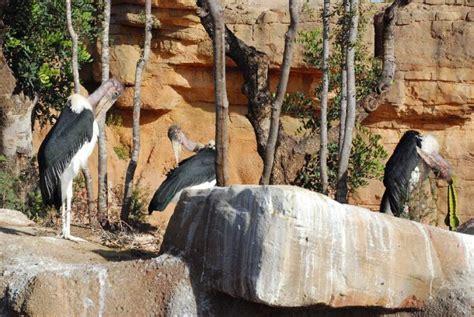 Fotos: Fotos: El nuevo zoo de Valencia   Imágenes   Imágenes