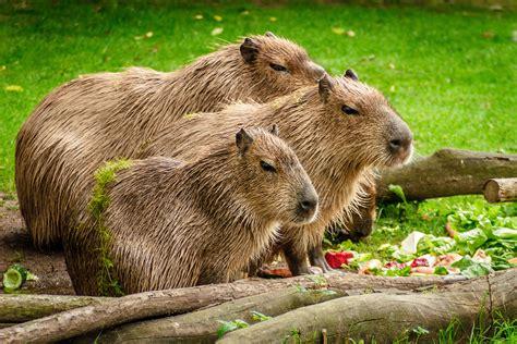 Fotos gratis : agua, grupo, madera, prado, animal, linda ...
