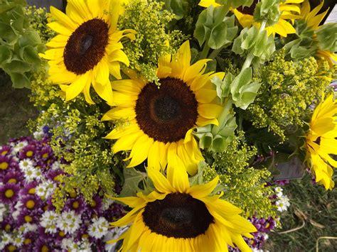 Fotos gratis : campo, verano, botánica, amarillo, jardín ...