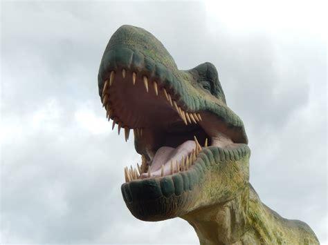 Fotos gratis : fauna, dinosaurio, Carnívoro, tiranosaurio ...