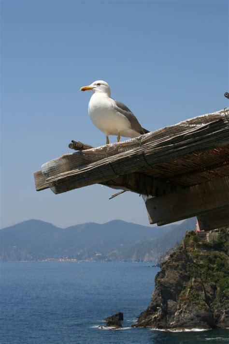 Fotos gratis : mar, costa, agua, naturaleza, Oceano ...