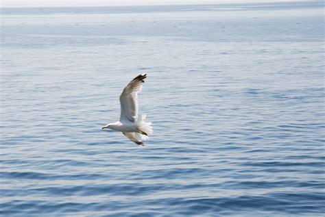 Fotos gratis : mar, costa, Oceano, pájaro, ala, pelícano ...