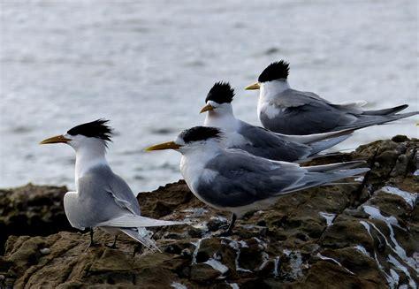Fotos gratis : mar, naturaleza, pájaro, ave marina, fauna ...