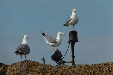 Fotos gratis : mar, pájaro, ave marina, fauna silvestre ...