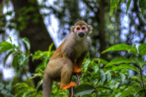 Fotos gratis : naturaleza, bosque, animal, fauna silvestre ...