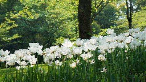 Fotos gratis : naturaleza, césped, flor, campo, prado ...