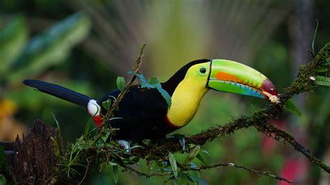 Fotos gratis : naturaleza, rama, pájaro, flor, fauna ...