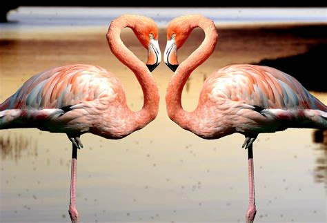 Fotos gratis : paisaje, naturaleza, pájaro, animal, fauna ...