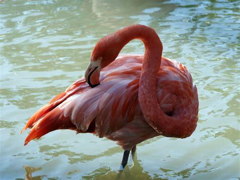 Fotos gratis : pájaro, ala, animal, fauna silvestre ...