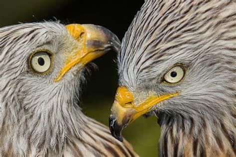 Fotos gratis : pájaro, ala, fauna silvestre, pico ...