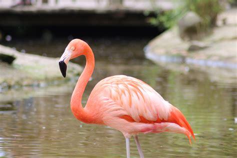 Fotos gratis : pájaro, animal, fauna silvestre, pico ...