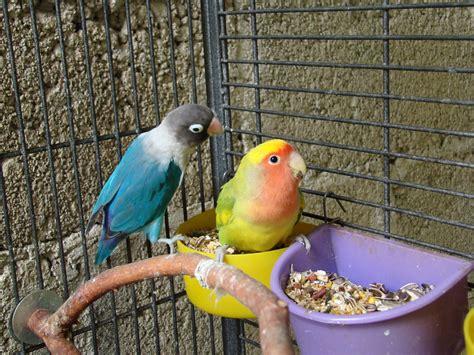 Fotos gratis : pájaro, pico, vistoso, fauna, jaula ...